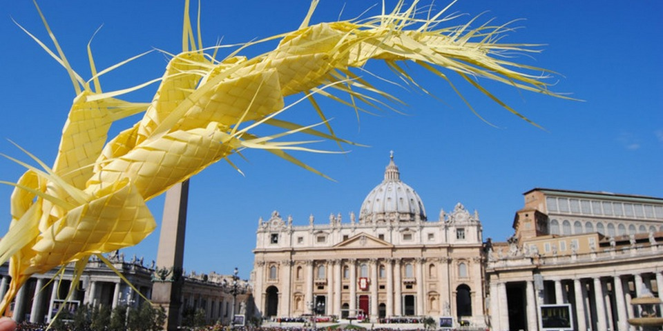 palm tree on st peter's square
