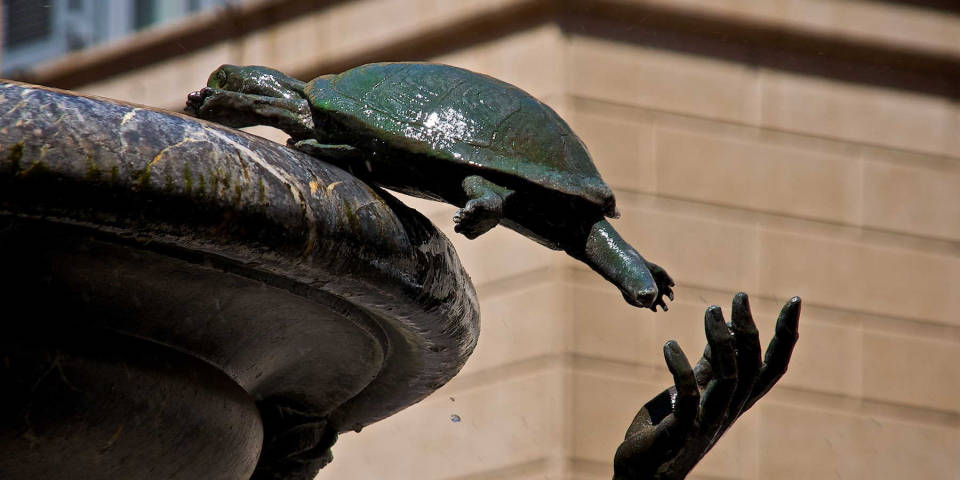 turtle on the turtle fountain in Rome